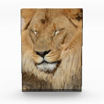 Adorable Lion Acrylic Award