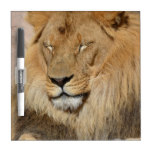 Adorable Lion Dry-Erase Board