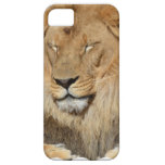 Adorable Lion iPhone SE/5/5s Case
