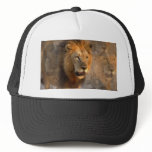 King of the Jungle Baseball Hat