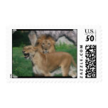 Lion Couple Postage
