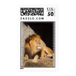Lion Photo Postage Stamp